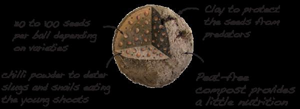 seedball infographic