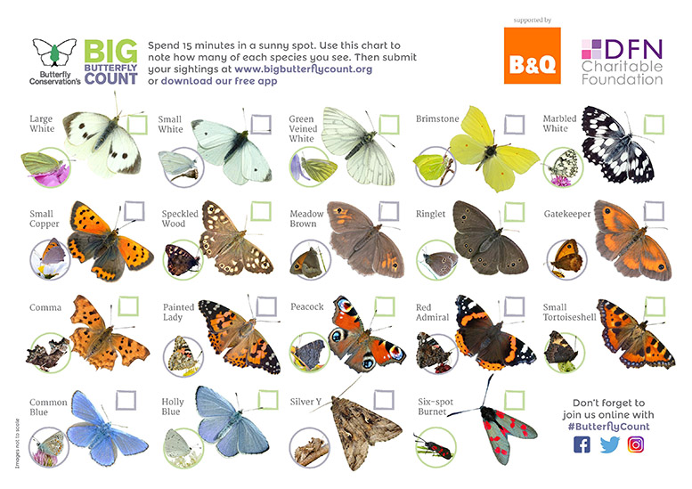 Butterfly ID Sheet for England