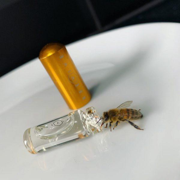 Seedball Bee Revival Kit