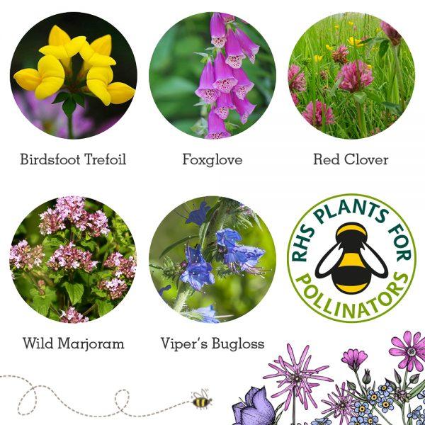 Bee Mix Flowers