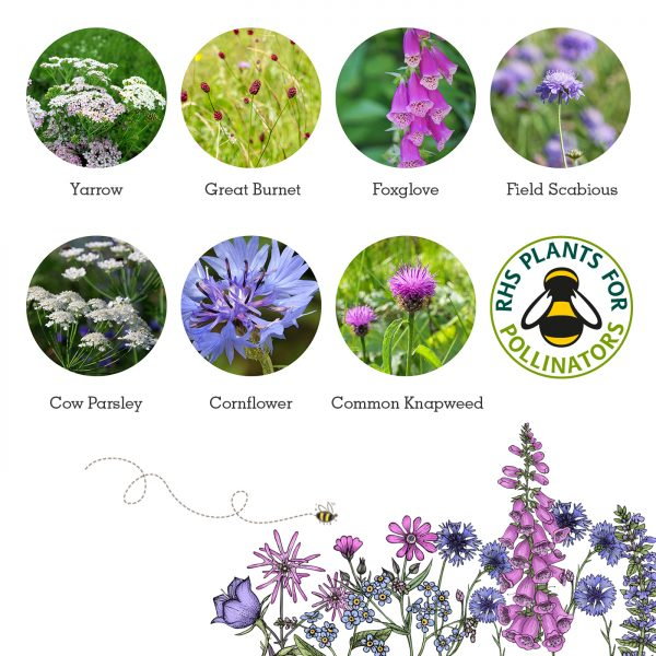 Beetle Mix Flowers