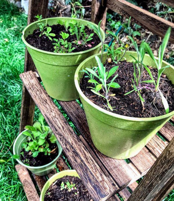 Growing Bamboo Pots