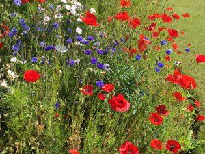 Seedball Wildflowers