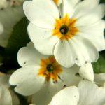 Seedball Wildflower
