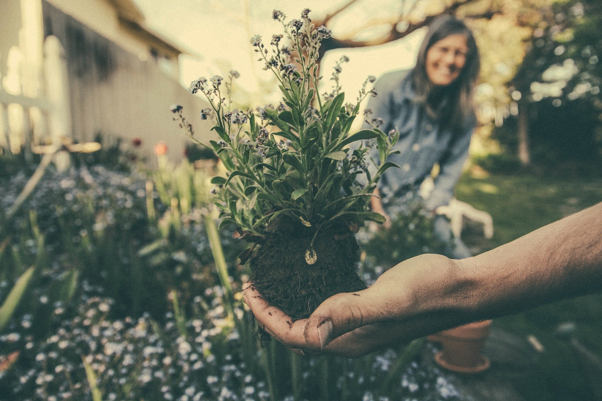 Hand Picking Up Flower
