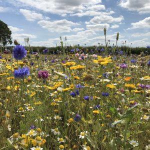 Seedball Wildflowers for birds