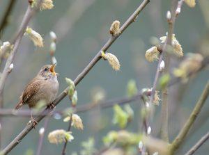 seedball wildflowers for birds 07