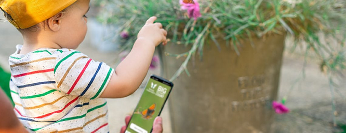 Big Butterfly Count app and child - crd Butterfly Conservation