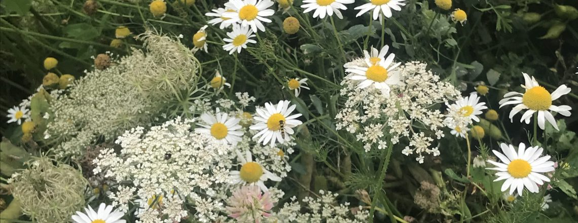 _Intro Wildflowers_IMG_1122